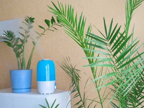 best humidifier for plants