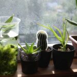 humidity for plants